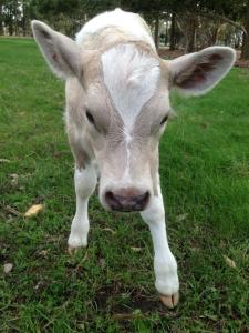 'Pixie' from Greener Pastures Sanctuary. Photo courtesy of Marjie Bremner